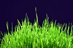 Freshly Grown Grass Stock Photos