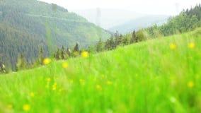 Free Freshly Grown Green Grassed Field Stock Image - 72801581