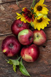 Freshly harvested apples Stock Photography