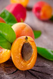 Freshly harvested apricots Stock Images
