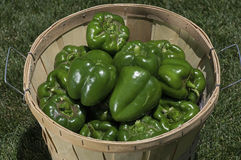 Freshly Harvested Bell Peppers Royalty Free Stock Photography