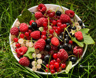 Freshly harvested berries in bowl, unwashed Royalty Free Stock Photos
