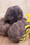 Freshly harvested black truffle Stock Images