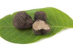 Freshly harvested black truffle Stock Image