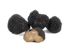 Freshly harvested black truffle Stock Photography