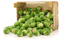 Freshly harvested  brussel sprouts Stock Photography