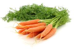 freshly harvested bunch of carrots  Stock Image