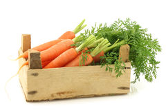 Freshly harvested bunch of carrots Stock Photos
