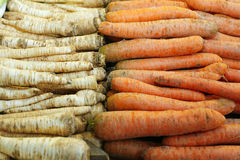 Freshly harvested carrots from the farm for sale Royalty Free Stock Image