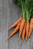 Freshly harvested carrots with green leaves Stock Image