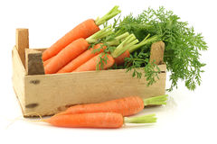 Freshly harvested carrots Royalty Free Stock Photo