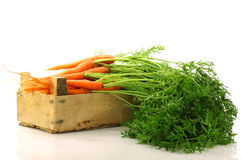 Freshly harvested carrots in a wooden crate Royalty Free Stock Photography