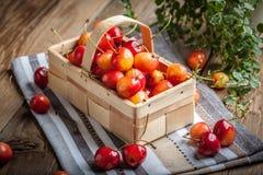 Freshly harvested cherrie. Royalty Free Stock Photo