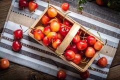Freshly harvested cherrie. Stock Photography