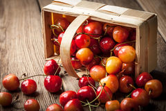 Freshly harvested cherrie. Royalty Free Stock Photography