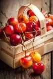 Freshly harvested cherrie. Stock Images