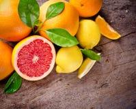 Freshly harvested citruses Stock Photos