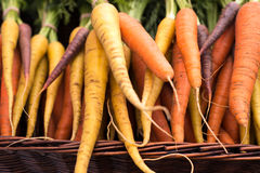 Freshly harvested, colorful organic carrots at farmer's market Stock Images