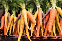 Freshly harvested, colorful organic carrots at farmers market Royalty Free Stock Photo