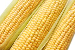 Freshly harvested corn Royalty Free Stock Images