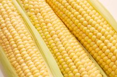 Freshly harvested corn Stock Images