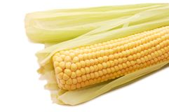 Freshly harvested corn Royalty Free Stock Image