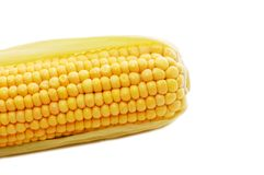 Freshly harvested corn Stock Photography