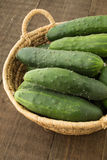 Freshly harvested Cucumbers Royalty Free Stock Images