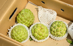 Freshly harvested custard apples Stock Photos