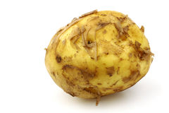Freshly harvested Dutch new potato Stock Photos