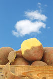 Freshly harvested dutch potatoes. Called Bildtstar and a peeled one against a blue sky with some clouds Stock Photography