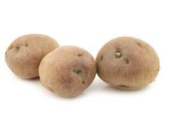 Freshly harvested dutch potatoes called `Koopmans Blue` Royalty Free Stock Photo