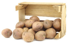 Freshly harvested dutch potatoes called `Koopmans Blue` Royalty Free Stock Photography