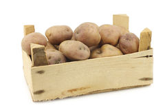 Freshly harvested dutch potatoes called `Koopmans Blue` Royalty Free Stock Photos