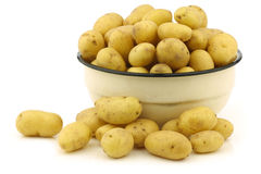 Freshly harvested dutch seed potatoes Royalty Free Stock Photography