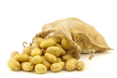 Freshly harvested dutch seed potatoes Stock Photos