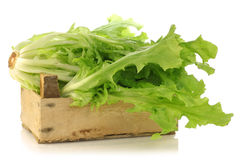 Freshly harvested endive in a wooden box Stock Images