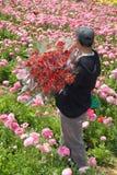 Freshly harvested flowers Stock Photos
