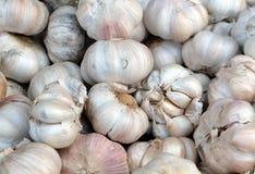 Freshly harvested garlic Stock Photography