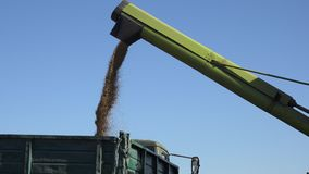 Freshly harvested grain cereal falling into truck trailer on blue sky background. 4K stock footage