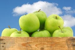 Freshly harvested Granny Smith apples Royalty Free Stock Photo
