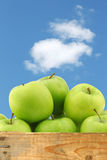 Freshly harvested Granny Smith apples Royalty Free Stock Photography