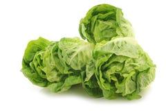Freshly harvested green little gem lettuce Royalty Free Stock Photos