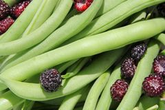 Freshly Harvested Green String Beans and Black Cap Rasberries. A collection of freshly harvested green string bean vegetables and black cap raspberries from the Stock Photos