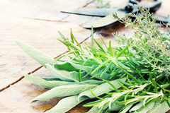 Freshly harvested herbs Royalty Free Stock Images