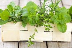 Freshly harvested herbs Stock Image
