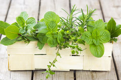 Freshly harvested herbs in a basket Royalty Free Stock Photos