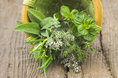 Freshly harvested herbs in a basket Stock Image