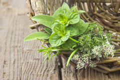 Freshly harvested herbs Royalty Free Stock Photography