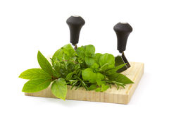 Freshly harvested herbs with knife on wooden board. White background stock images